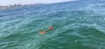 Lille undervandsdrone skal hjælpe fiskere